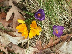 Easing Into a Healthy Spring