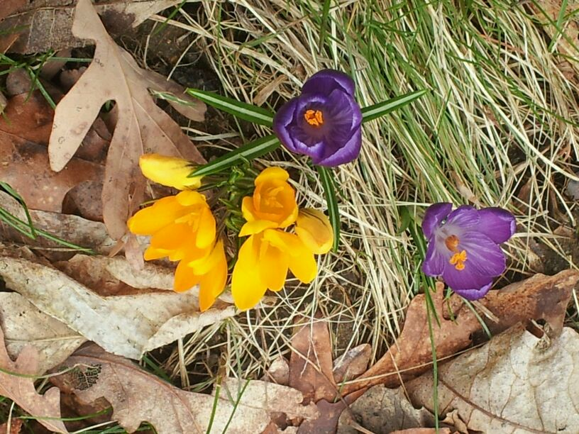 Easing Into Spring Health