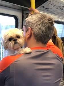 love dog on train